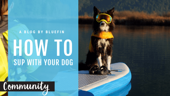 Bluefin sup with your pup