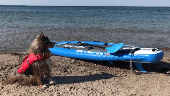 beginner paddle board, The Best Beginner Paddle Board