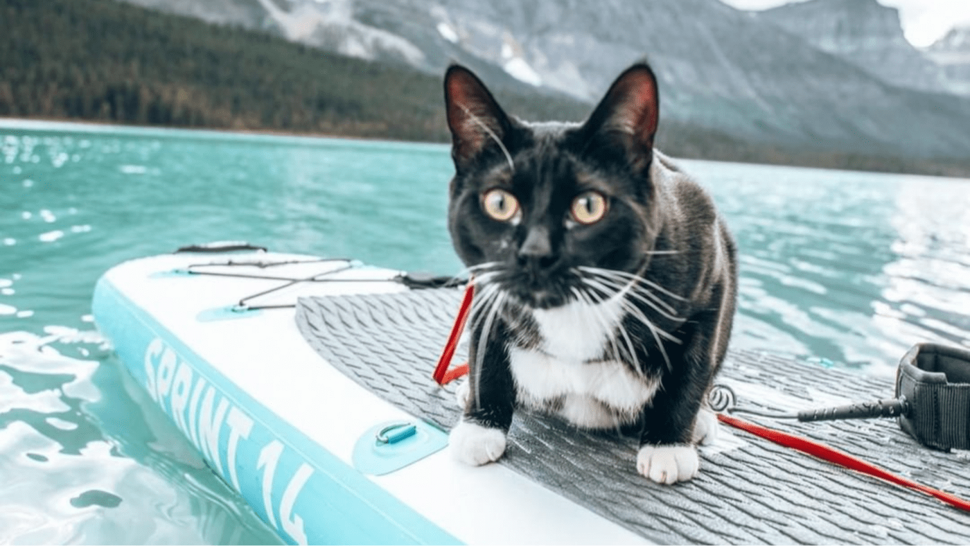 paddleboard pictures